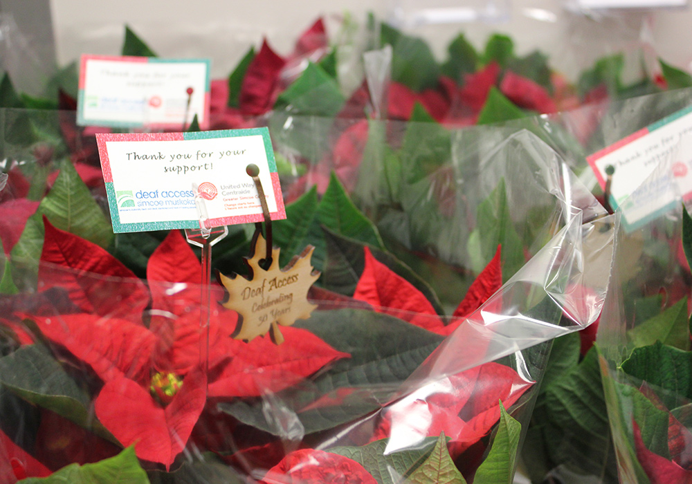 poinsettias_img